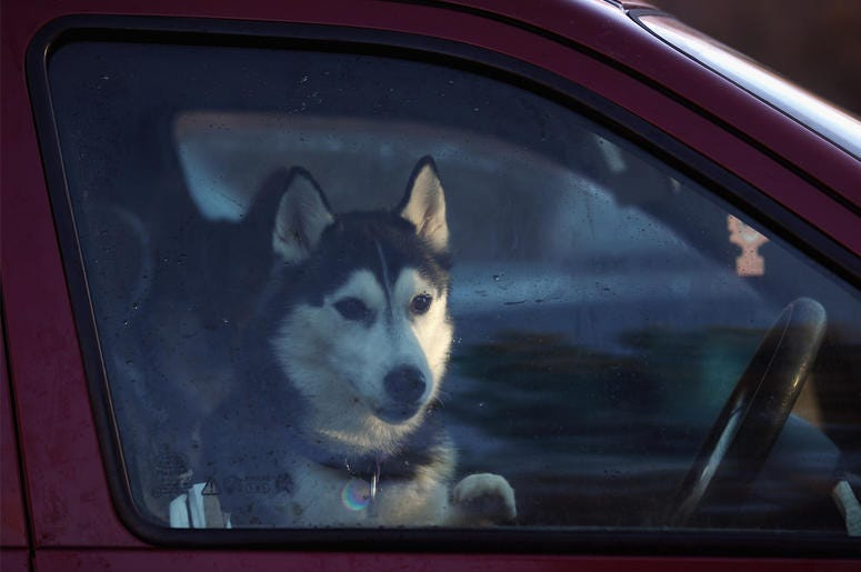 Dog in a car (Photo credit: Jeff J Mitchell/Getty Images)