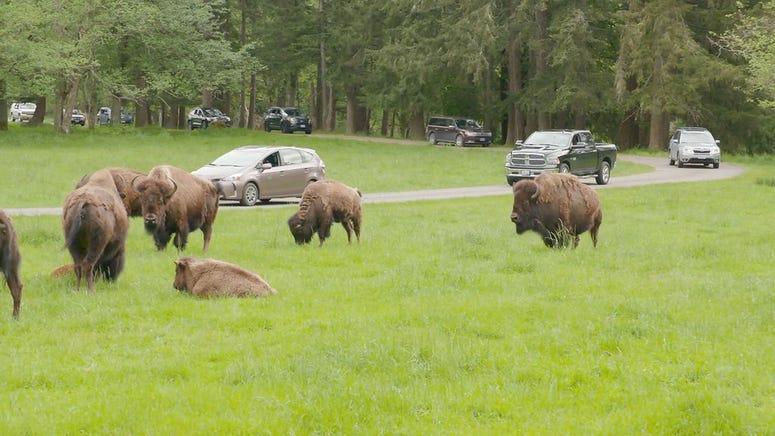 Northwest Trek Wildlife