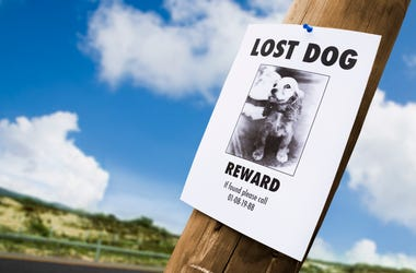 Group Therapy: Found Dog, Lost Reward