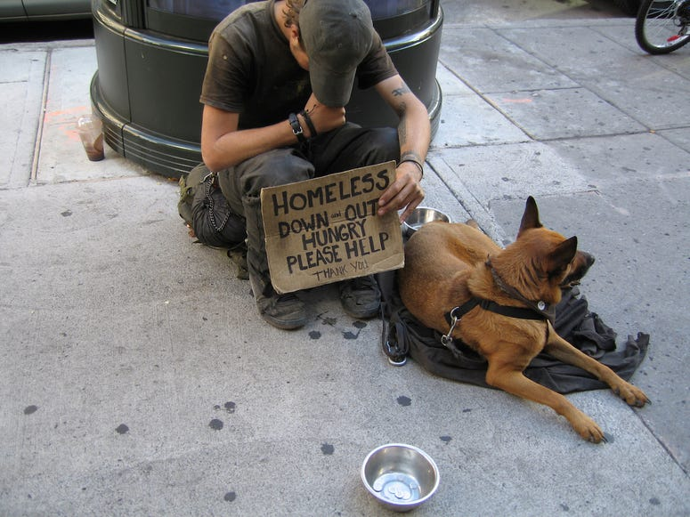 Dogs, Homeless, Dogs as Pets