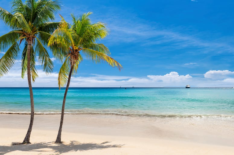 Beach with Palm Trees