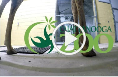 Chattanooga Zoo