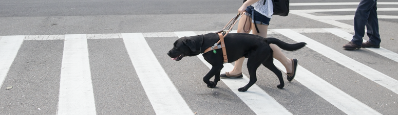Visually Impaired Say Please Be Patient: Guide Dogs Don't Know How to Social-Distance
