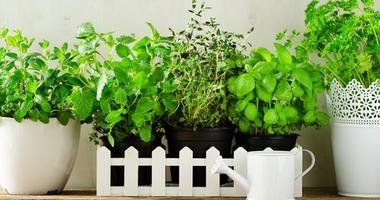 Grow herbs indoors