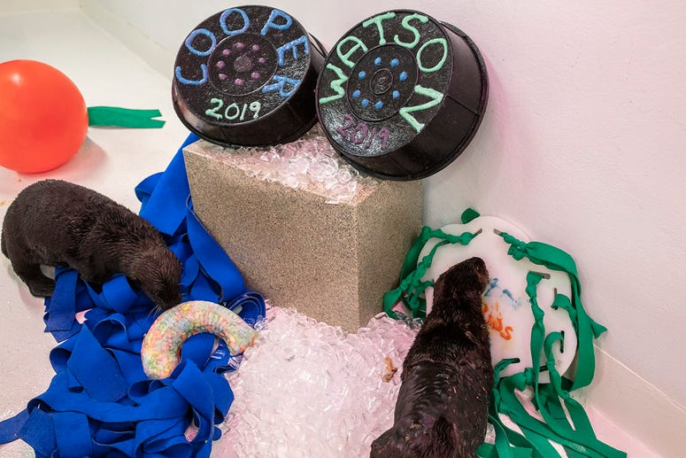 The Shedd Aquarium announced Monday that after a week and a half of voting, the tworescued sea otter pup have official names.