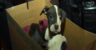 Police found a box of puppies in the street Tuesday in Englewood on the South Side.