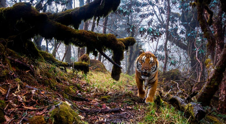 To capture this shot, photographer Emmanuel Rondeau set up eight triggered cameras in the Trongsa District of the Kingdom of Bhutan.