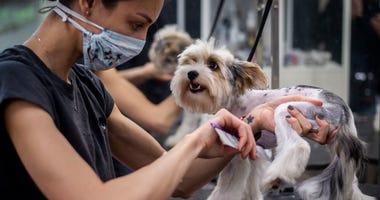 Illinois Pet Groomers Prepare To Reopen