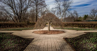 Nature awakening at Cantigny Park
