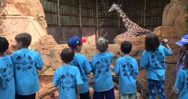 Lincoln Park Zoo Summer Camps