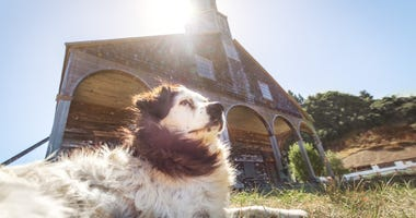 Pets blessed at church