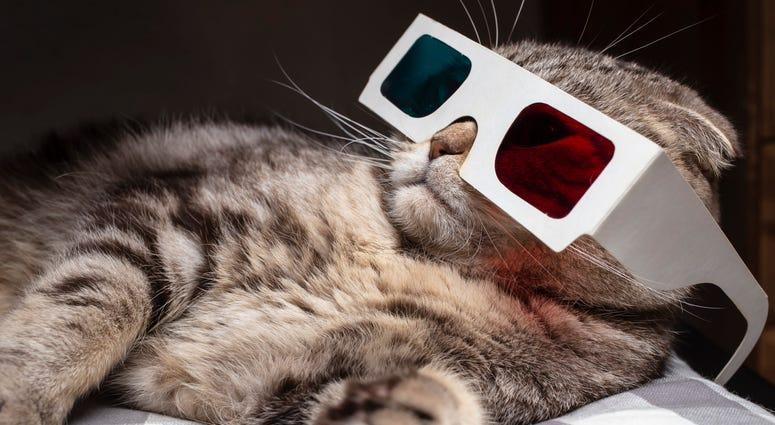 Cat Video 3-D