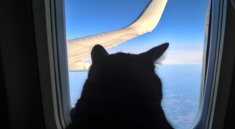 Pets, Service Animals, Planes