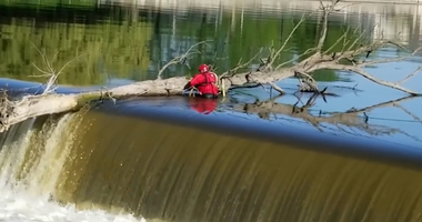 St. Charles firefighters were involved in a precarious operation today to get a large tree off a dam on the Fox River.