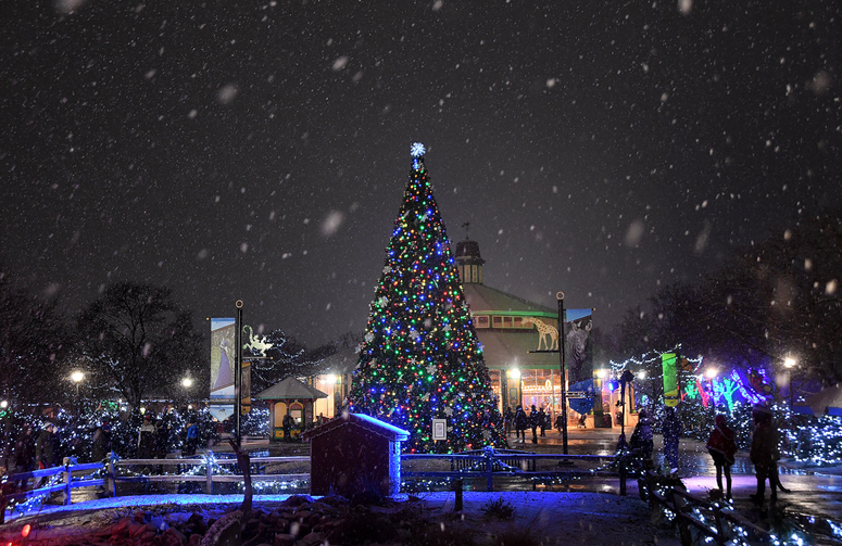 A 41-foot-tall Talking Tree near the north entrance greets guests to Brookfield Zoo's Holiday Magic.