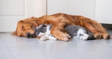 Pets Generic
