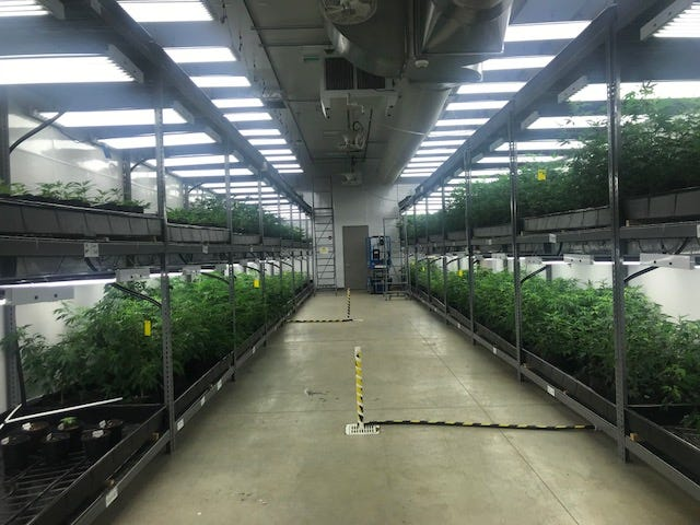 The grow room at Cresco Labs.