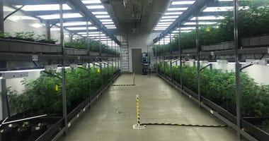 Cresco Labs Marijuana Room
