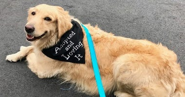 Dexter the dog can be found helping grieving families at Burns-Kish Funeral Home in Munster.