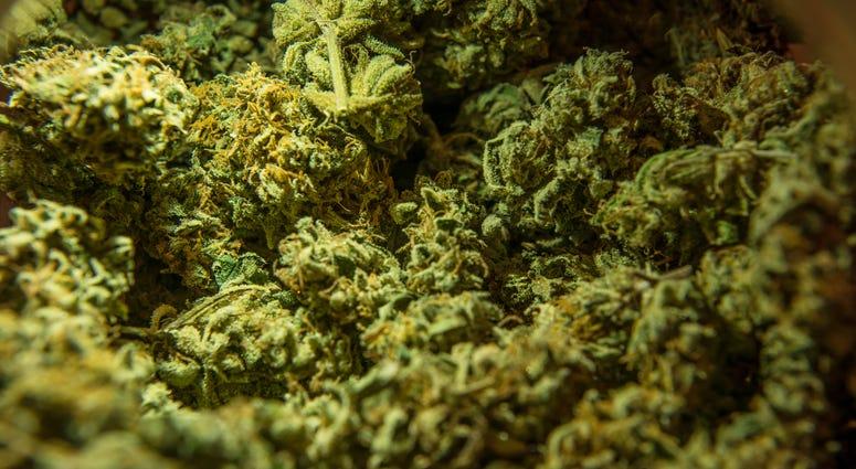 Marijuana Referendum