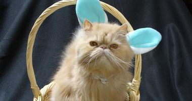 Cat Easter