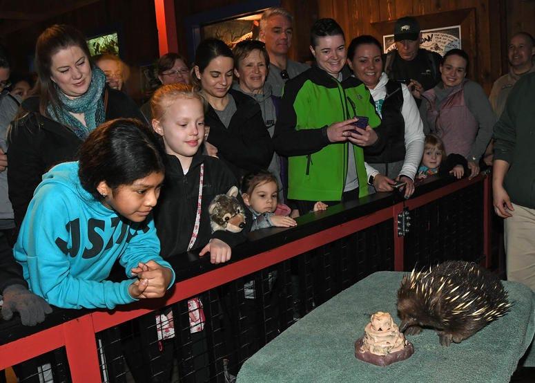 Brookfield Zoo oldest animal turns 50