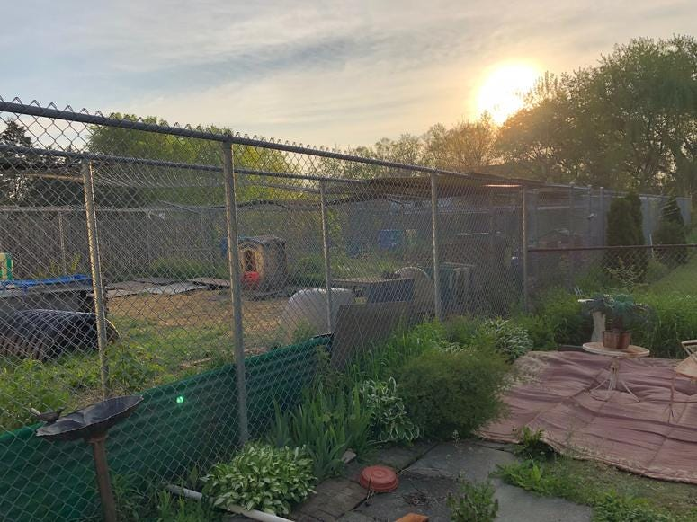 Tomi Tranchita's fenced area for coyotes