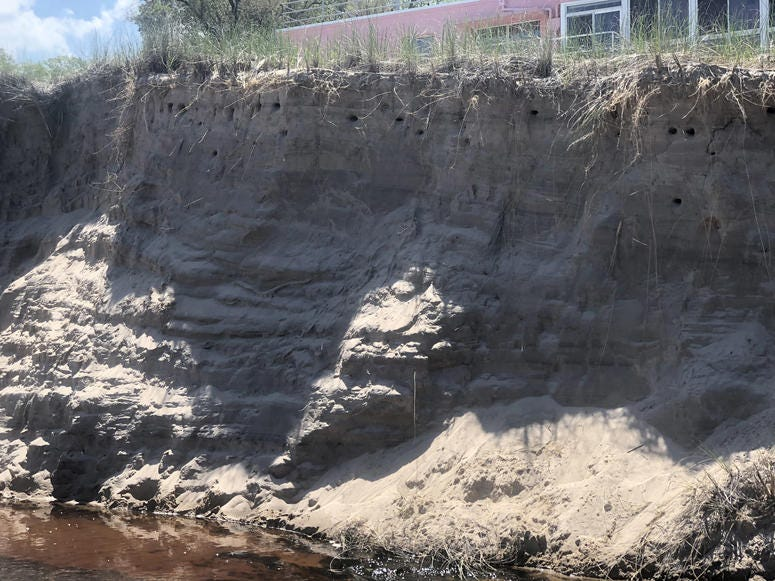 Swallows nest on beaches