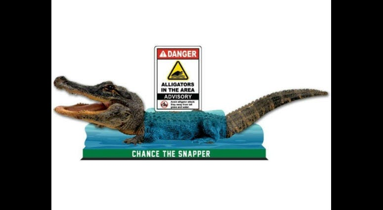 """""""Chance the Snapper"""" bobblehead"""