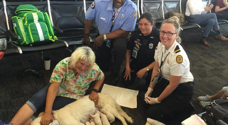 Service dog has puppies at airport
