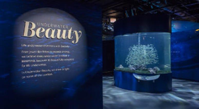 Shedd Aquarium Underwater Beauty