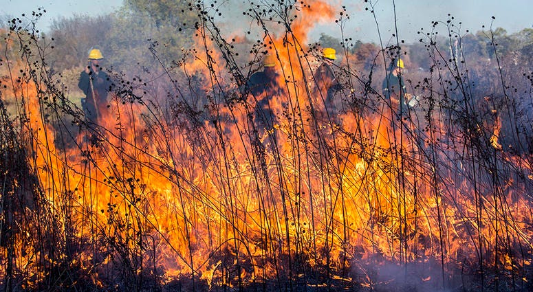 DuPage To Begin Spring Controlled Burns To Protect Native Plants
