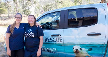 Jen Levine, Stranding Operations & Animal Care Manager from CIMWI, and Sage Rosenbrock, veterinary technician at Shedd Aquarium, are providing medical and rehabilitation care to the more than 55 rescued California sea lion pups around the clock.