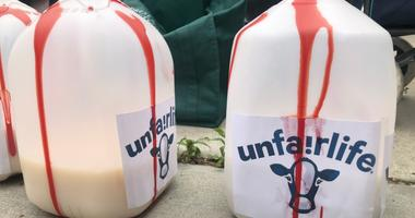 Protesters Rally Outside Fairlife Dairy Headquarters