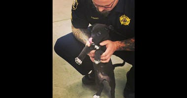 KC, New Kane County Jail Therapy Dog