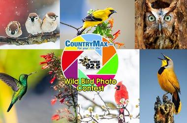 CountryMax Bird Photo Contest