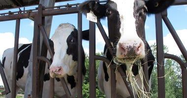 "As US milk sales rise amid pandemic, ""Got milk?"" ads return"