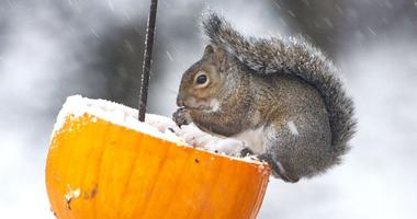 Record cold follows early snowstorm