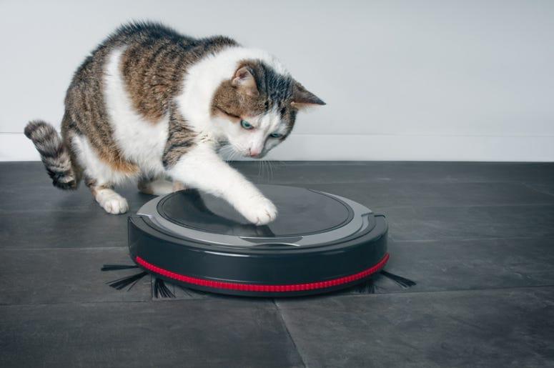 Cat and Vacuum