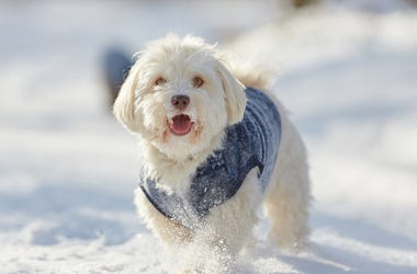 Happy Snowy Dog