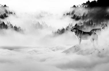 Wolves in Winterfell