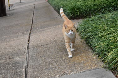 cat walking on sidewalk