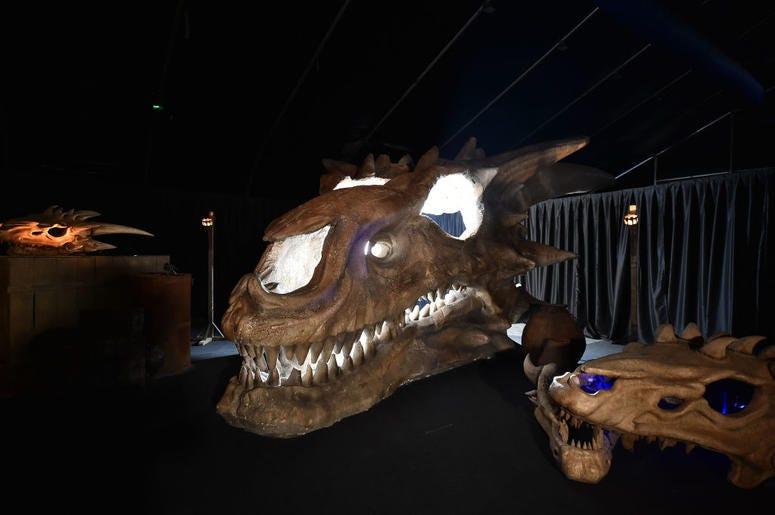 Giant Dragon Skull