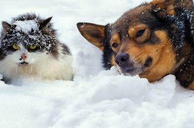 Pets Winter