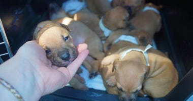 Puppies rescued in Asbury Park