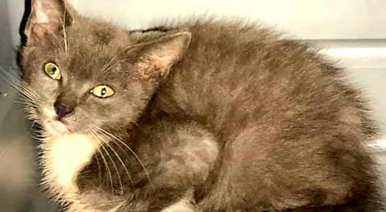 Kitten rescued on George Washington Bridge