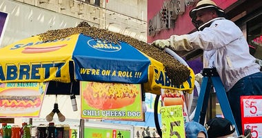 Times Square Bees