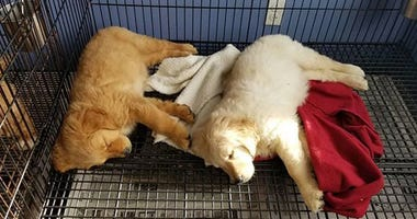 Puppies rescued from Danbury fire