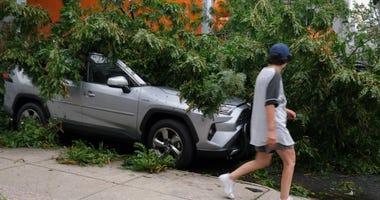 Isaias Brooklyn tree down