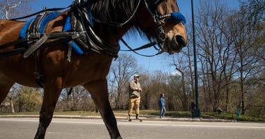 A carriage horse in Central Park